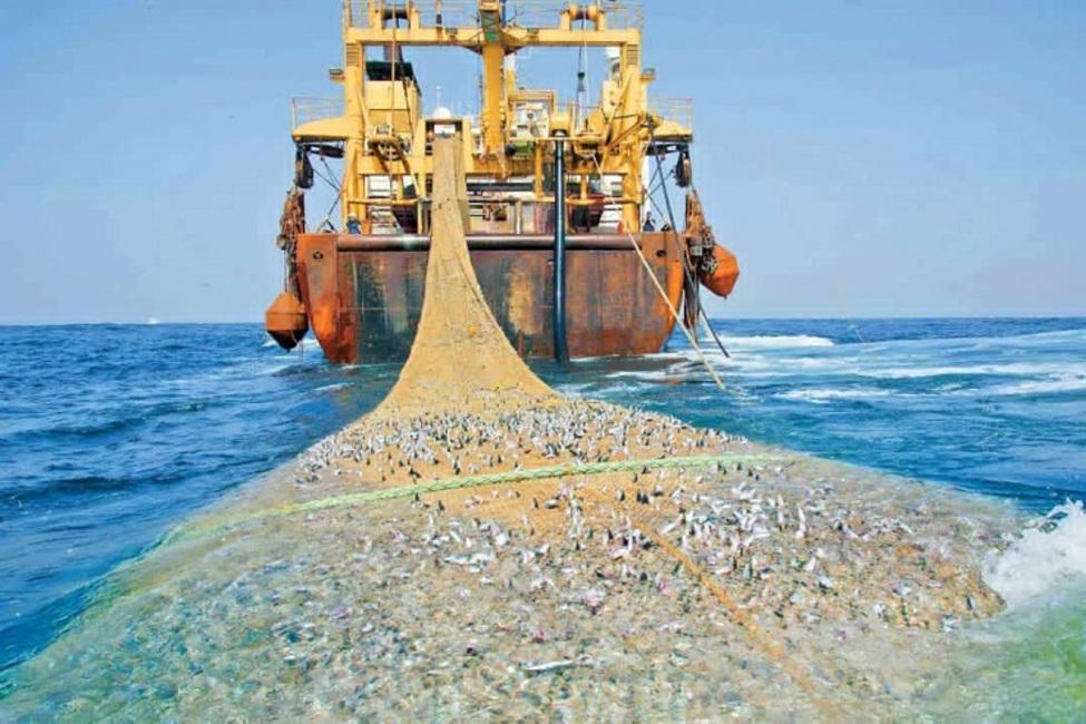 توقیف شناور غیرمجاز صید ترال در بندر جاسک