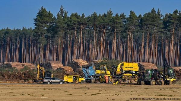 توقف دوباره ساخت کارخانه تسلا در آلمان، دلیل: حفاظت از مار و مارمولک