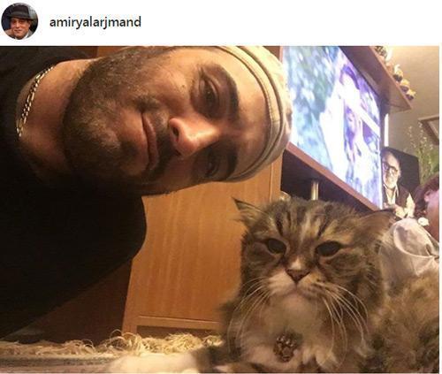 گربه امیریَل ارجمند هم رفت