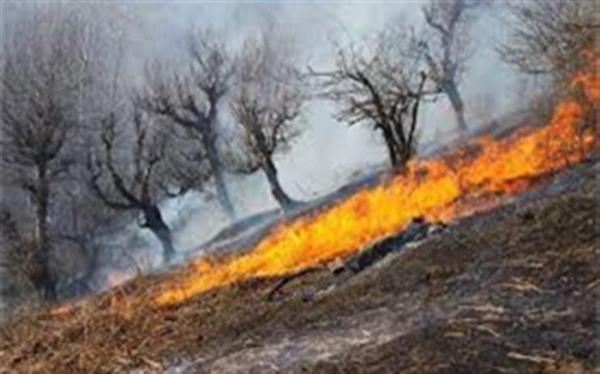 روشن کردن آتش در جنگل جرم است