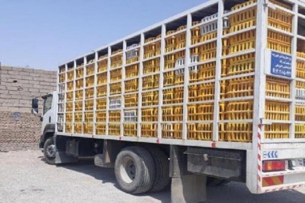 خبرنگاران ممنوعیت خروج مرغ از مازندران صحت ندارد