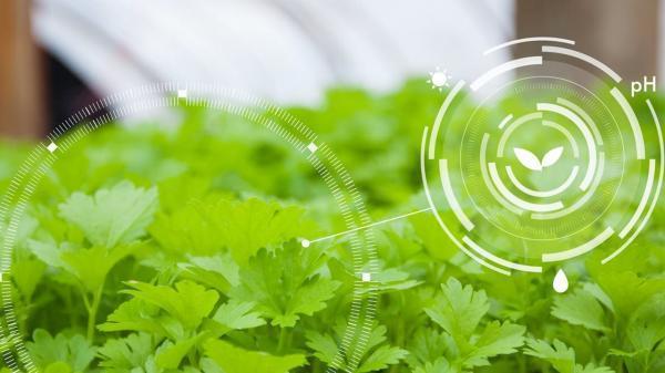 محصولات صنعتی فناوری نانو به حوزه کشاورزی رسید ، کشاورزی نیازمند فناوری های جدید