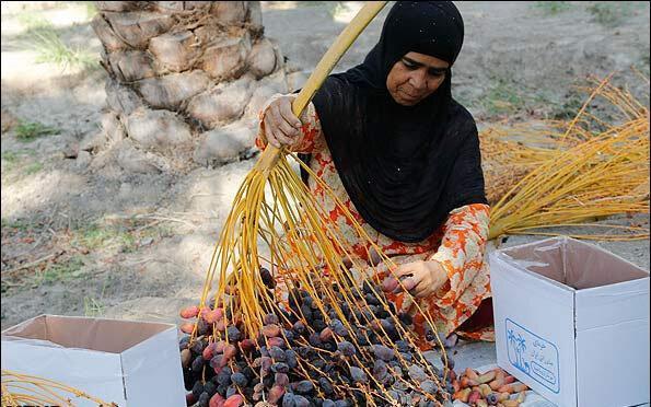 شناسایی زنان سرپرست خانوار سکونتگاه های غیر رسمی 15 استان